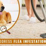 How to Address Flea Infestation in Pets?