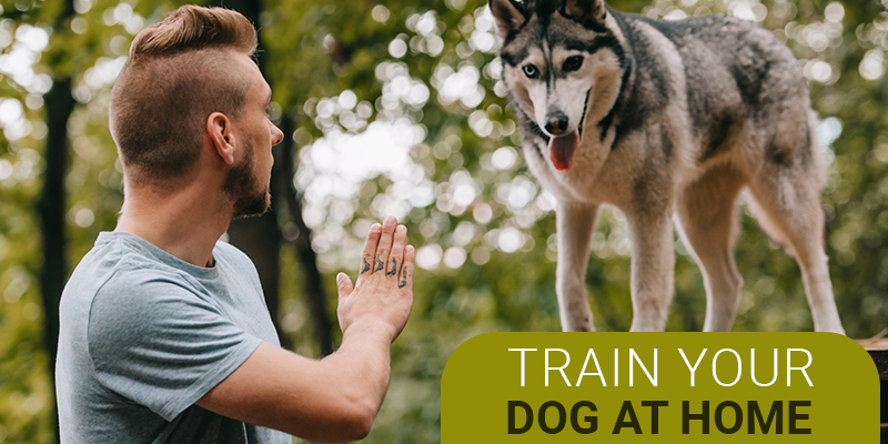 Train-your-dog-at-home