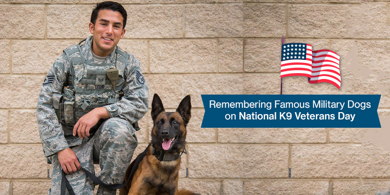 Remembering Famous Military Dogs on National K9 Veterans Day