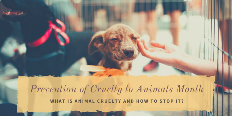 Prevention of Cruelty to Animals Month