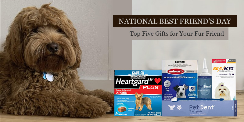 National Best Friend's Day – Top Five Gifts for Your Fur Friend