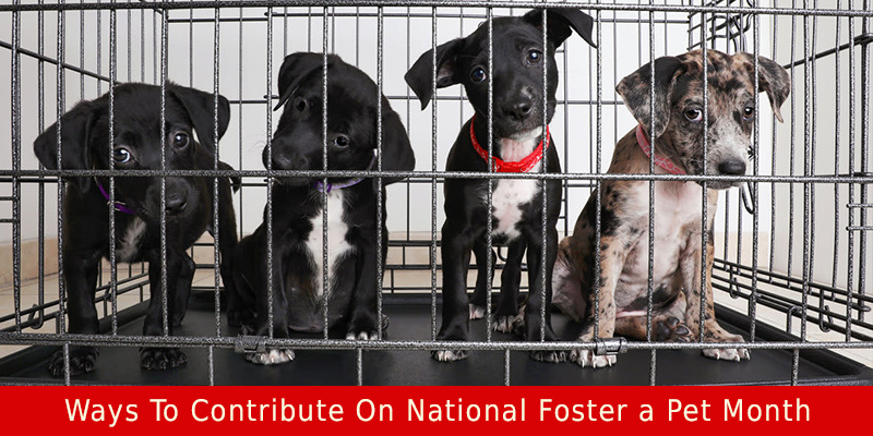 CVC-National-Foster-a-Pet-Month