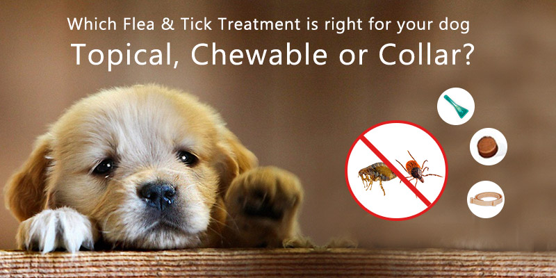 Which Flea & Tick Treatment is right for your dog – Topical, Chewable or Collar?
