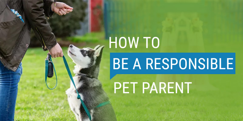 How To be A Responsible Pet Parent