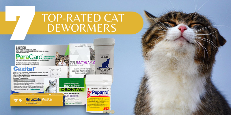 Top-Rated Cat Dewormers of 2021