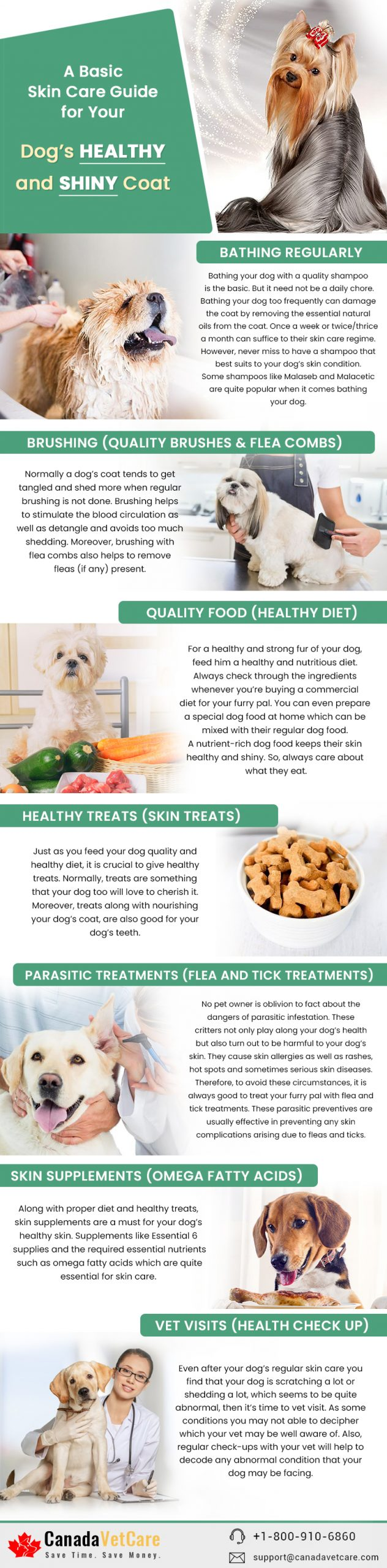 a-basic-skin-care-guide-for-your-dog's-healthy-and-shiny-coat