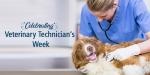 Celebrating Veterinary Technician's Week